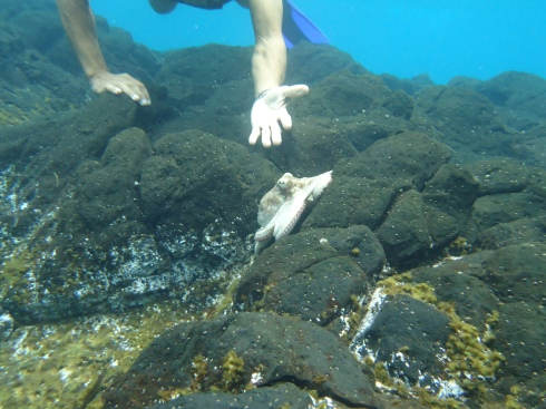"""O """"amigo polvo"""" nas pedras a 50 metros da faixa de areia. Também nos encantou durante um mergulho de snorkel"""