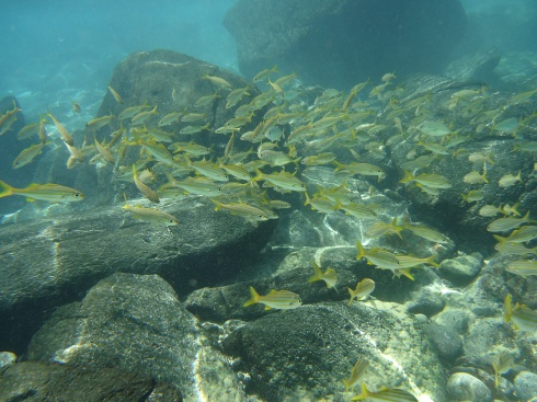 Cardume de peixes, que cruzou o nosso caminho, quando entrávamos no mar na praia da Conceição